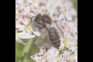 Pollinators Poetry Prize